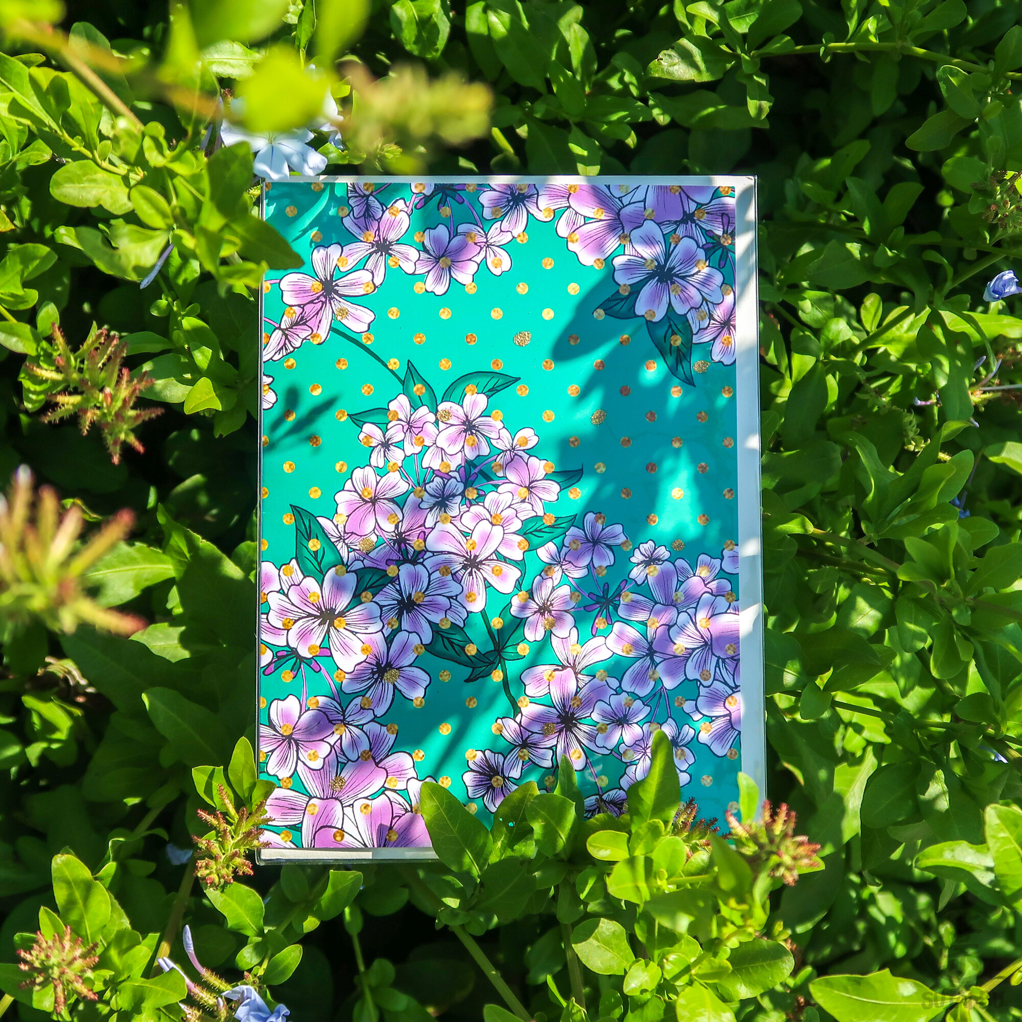 Limited Edition Greeting Card | Plumbago