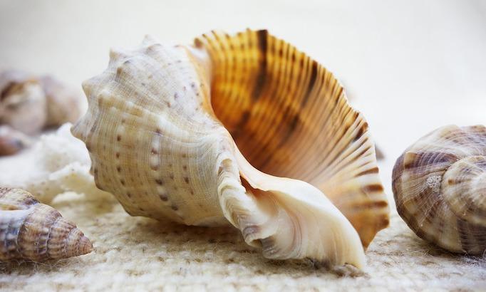 3 Shell-1.jpg