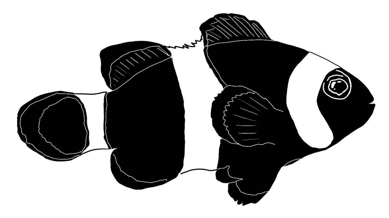clown+fish+black.jpg
