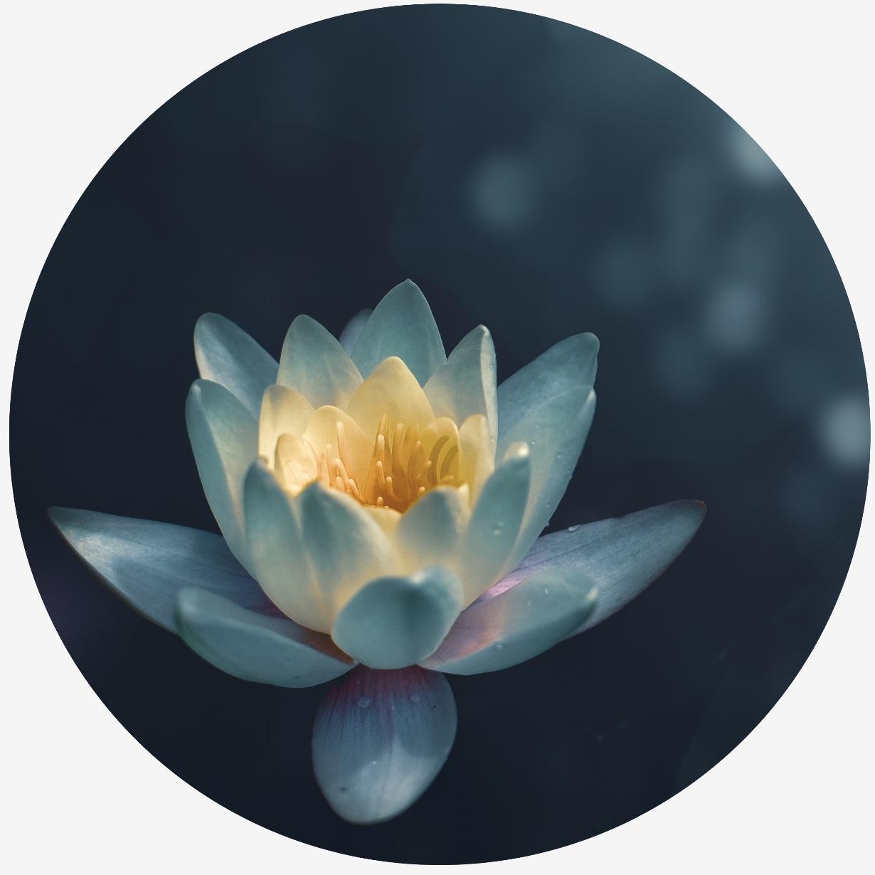 Flower+Circle+%281%29.jpg