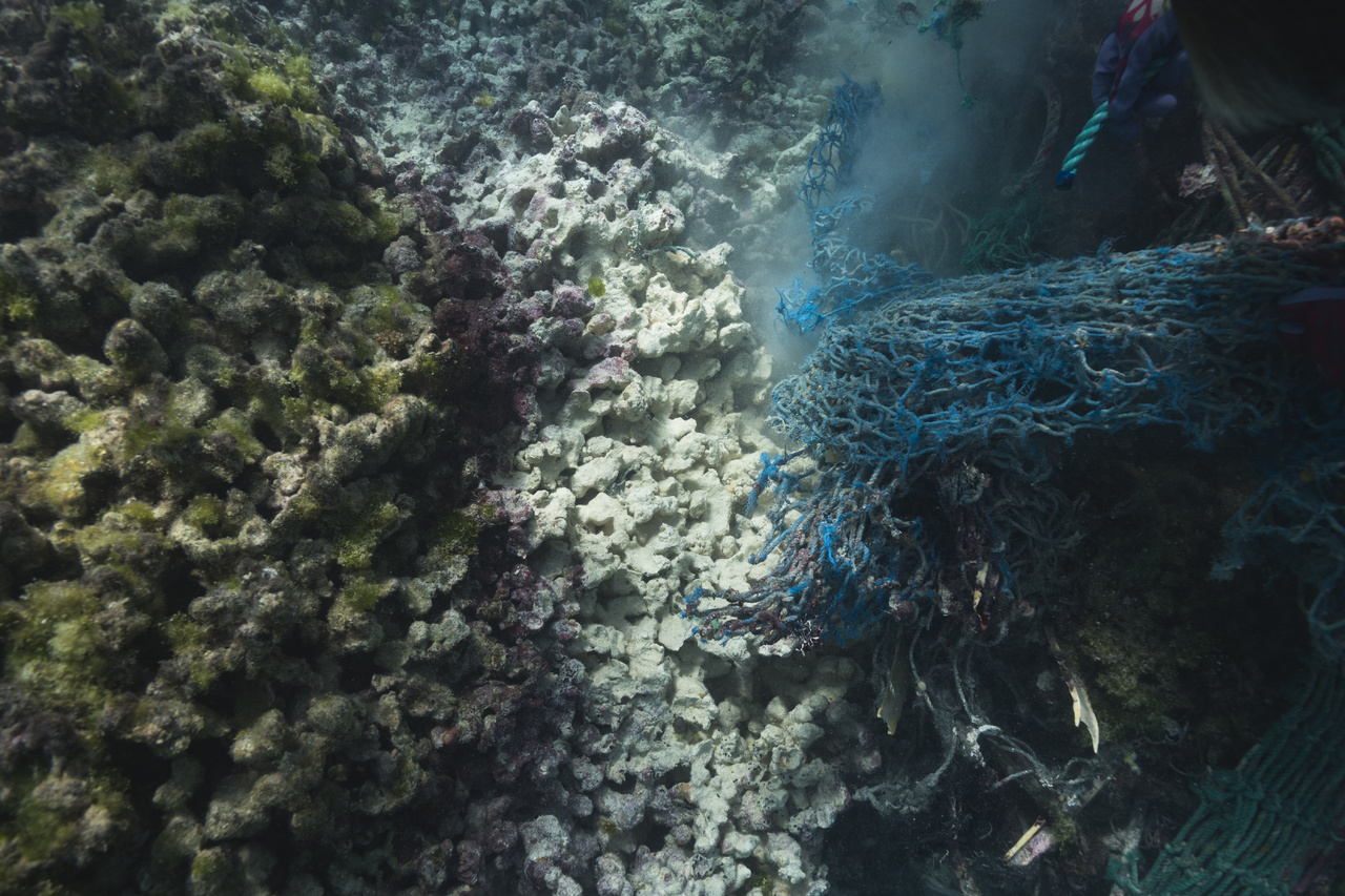 The marine debris team carefully removes a derelict fishing net from coral reef in the Northwestern Hawaiian Islands, showing the dead corals underneath (Photo: NOAA Fisheries/Steven Gnam).