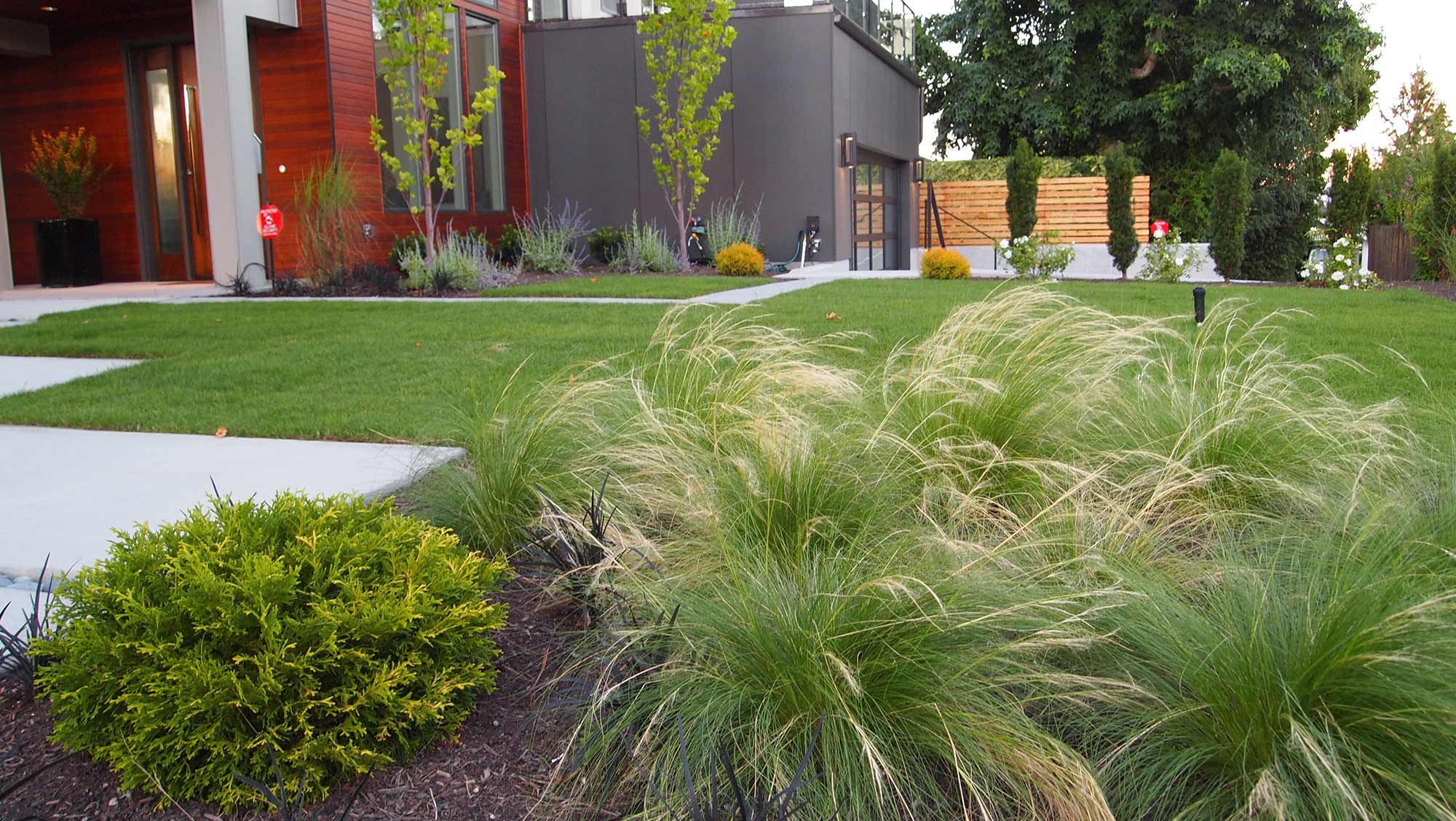 GRASSES TO CREATE MOVEMENT AND SOFTNESS