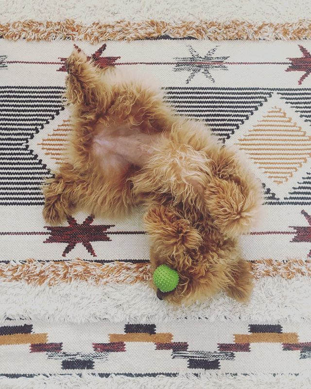 furbabe 🧡 #puppylove #sundayvibes