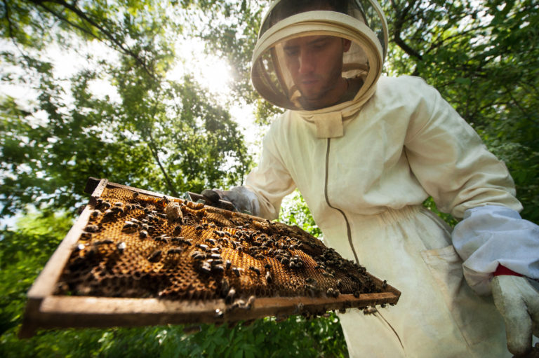 Our Beekeepers - Located in the heart of the Beehive state, we source our raw, uncut honey from a family owned operation in northern Utah. They work with a small group of local beekeepers to ensure consistent honey quality and sustainable beekeeping practices.