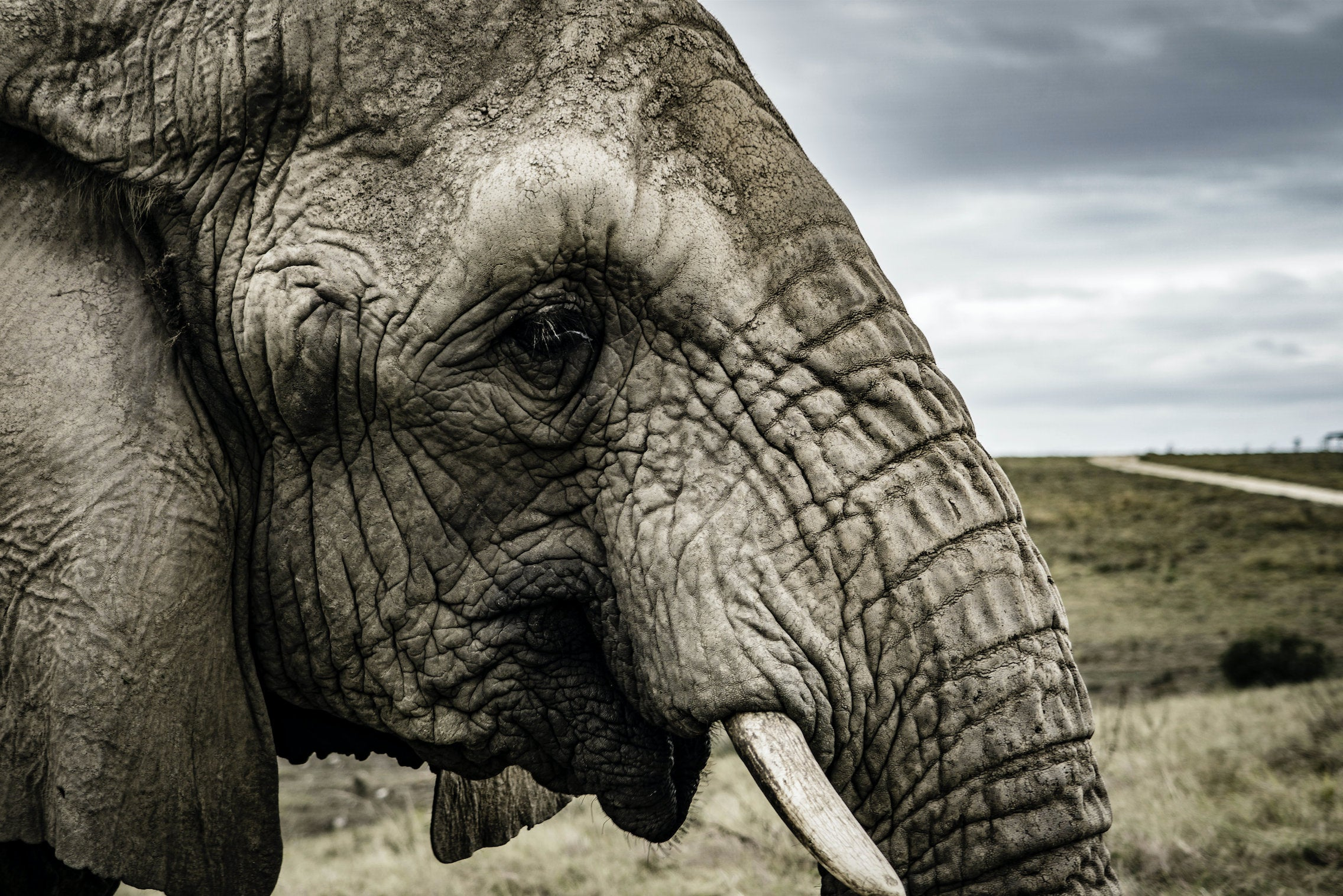 Elephants - South Africa - Triplicate