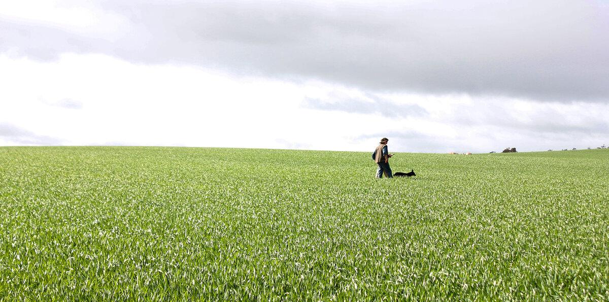 Wesfarmers Field