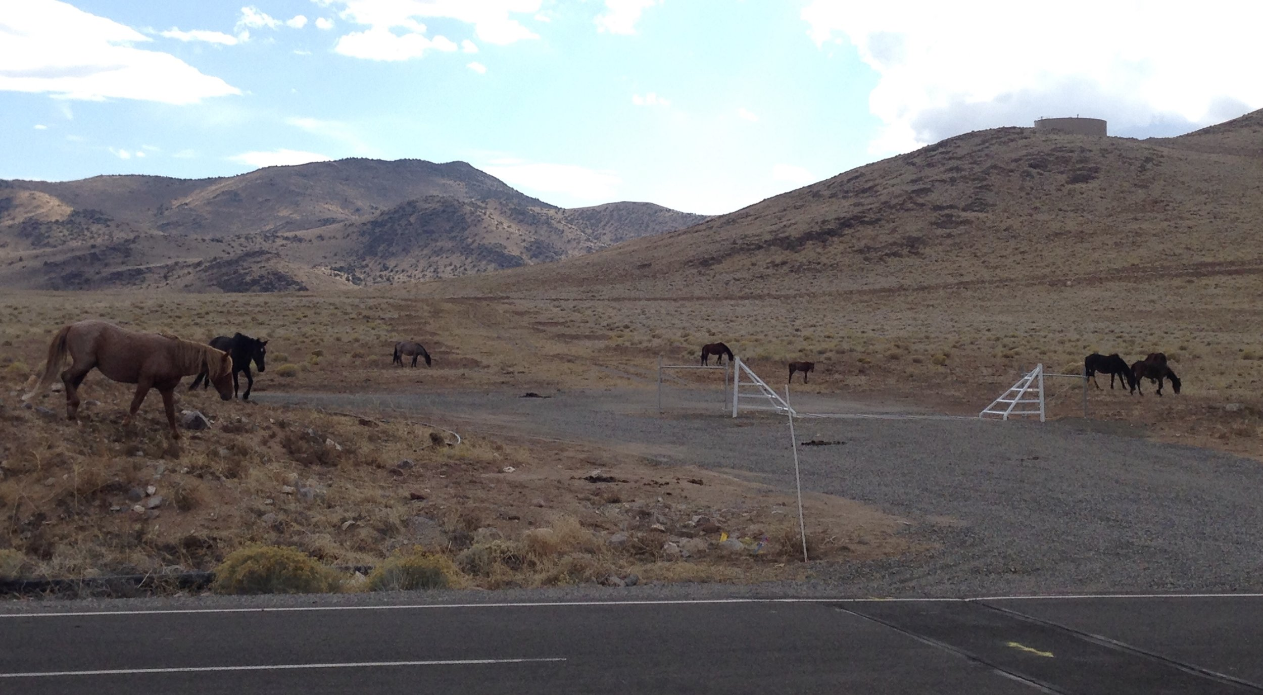 WILD HORSES INSPECTING THE USA PARKWAY