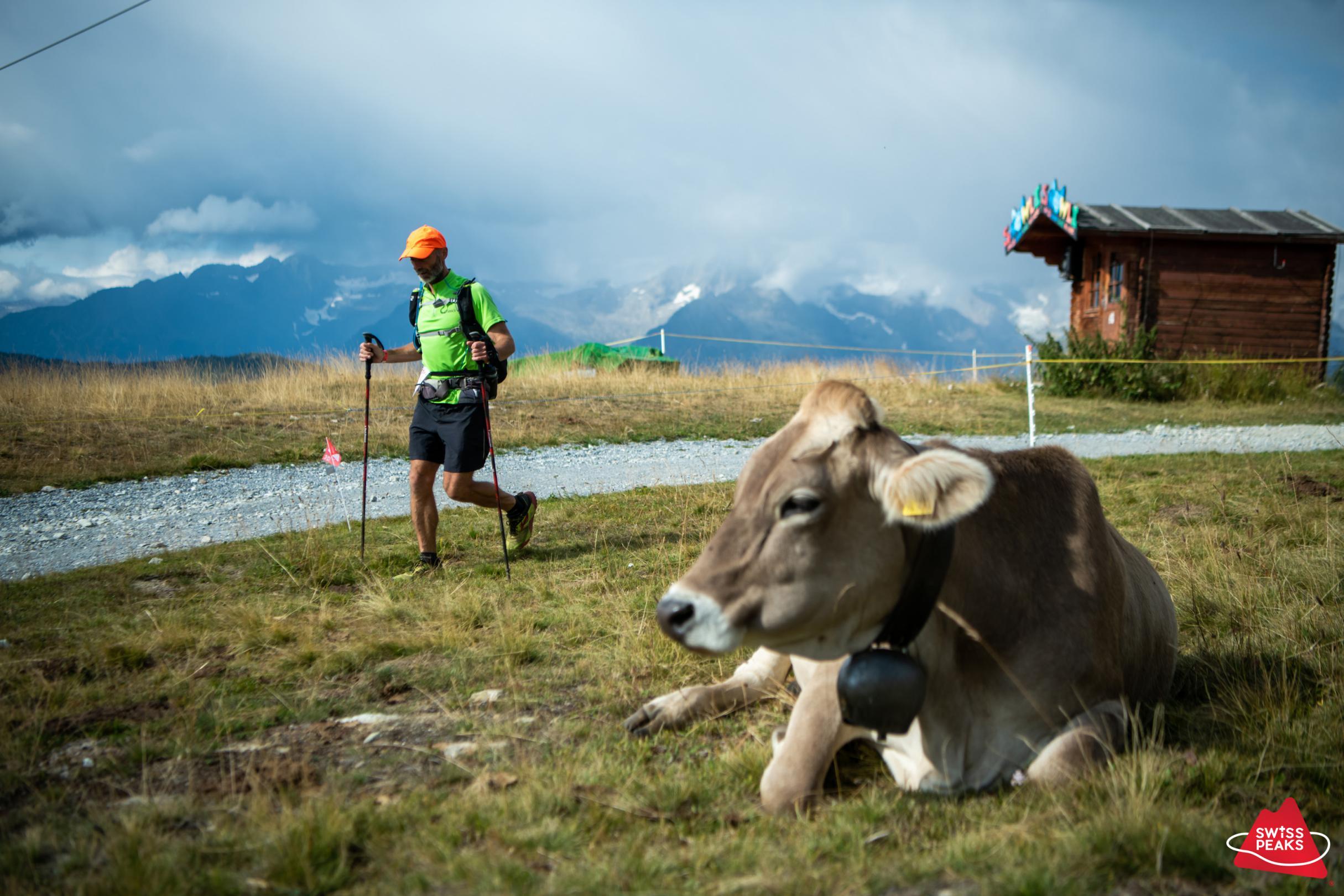 SwissPeaks Trail_Vache et coureur.jpg