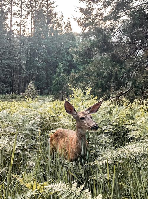 ashowens-yosemite-animals-travel-guide-2019.png