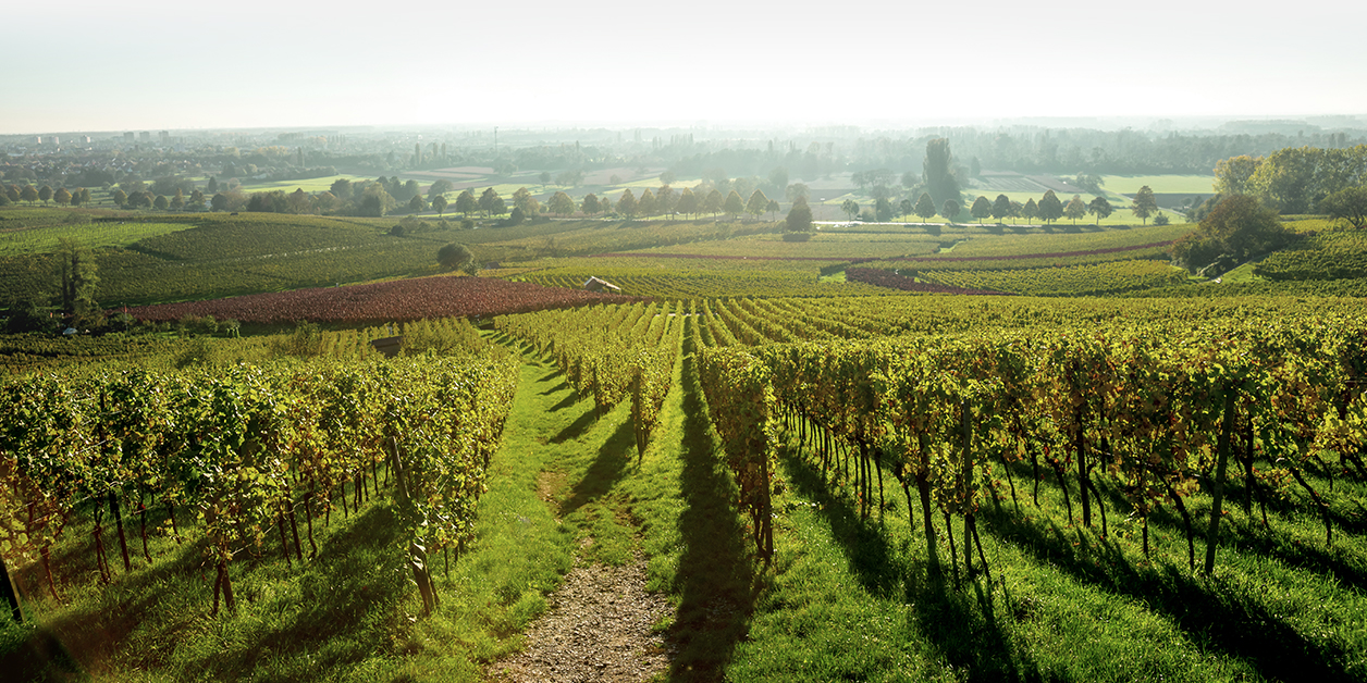 StDalfour_OurStory_FrenchVineyard.jpg