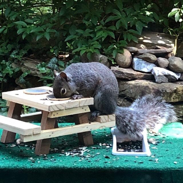 Travel Waist Pack,travel Pocket With Adjustable Belt Autumn Squirrels Stump Mushrooms Running Lumbar Pack For Travel Outdoor Sports Walking