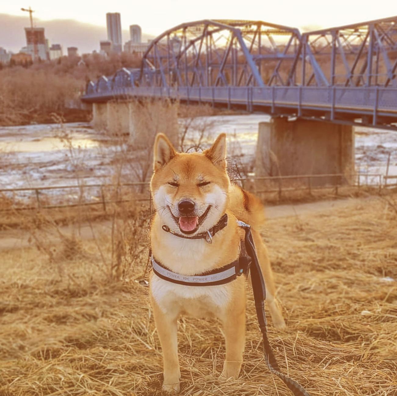 hapydog2.jpg