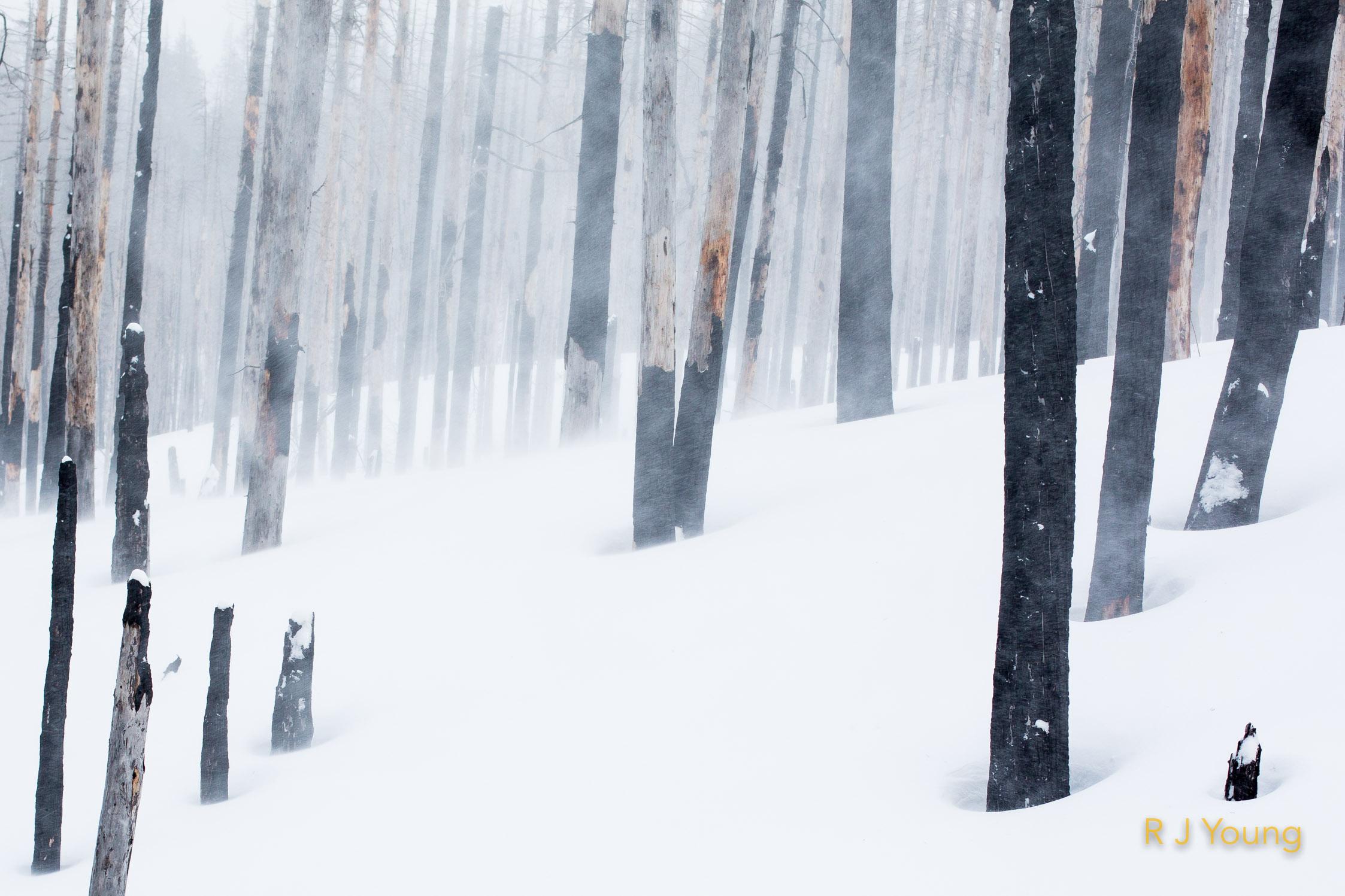 Winters Stance-2-2.jpg