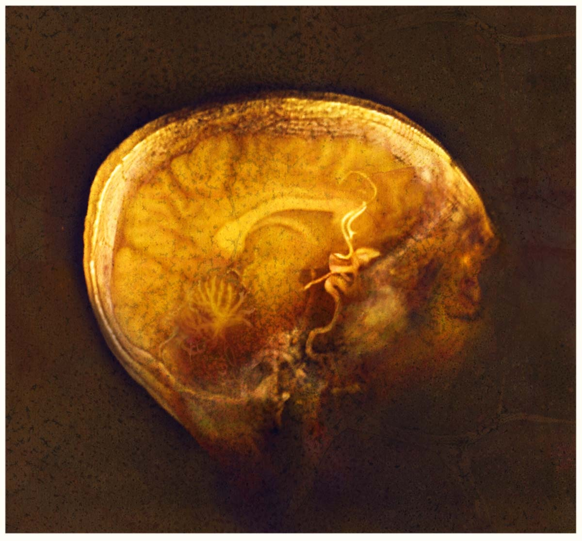Gold-black brain with floating colors (gold Bergerac)