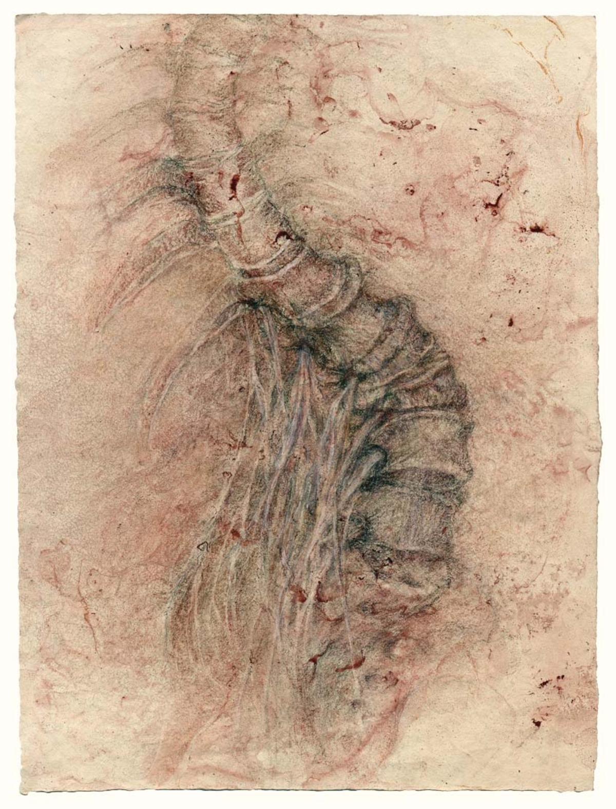 Turning vertebrae with spinal nerves (red), 15 x 11 in. $3,600