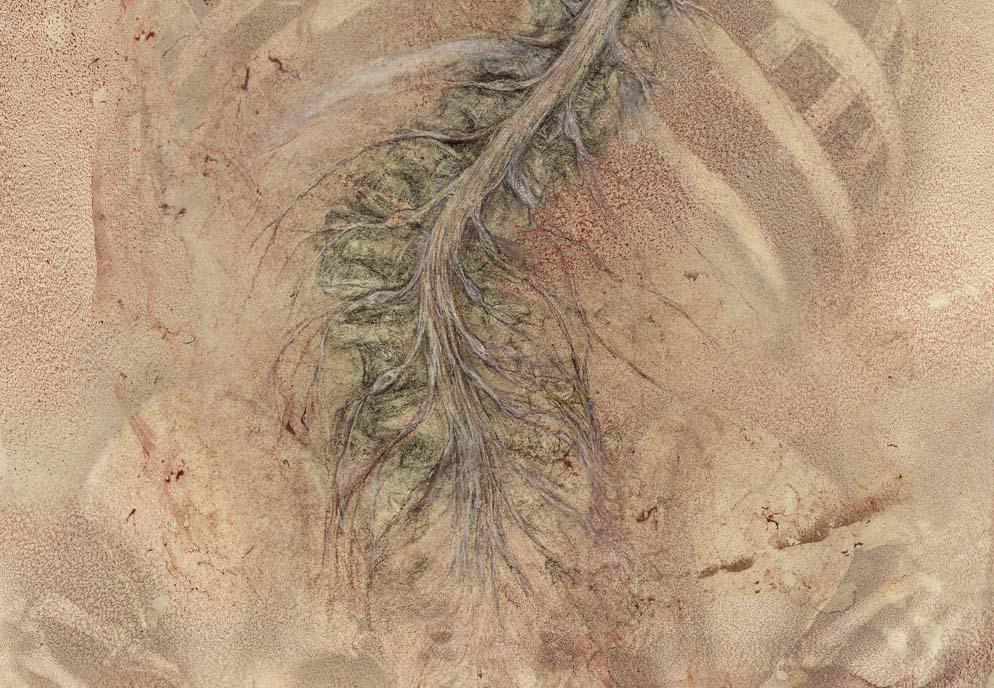 spinal_cord_scroll-detail.jpg