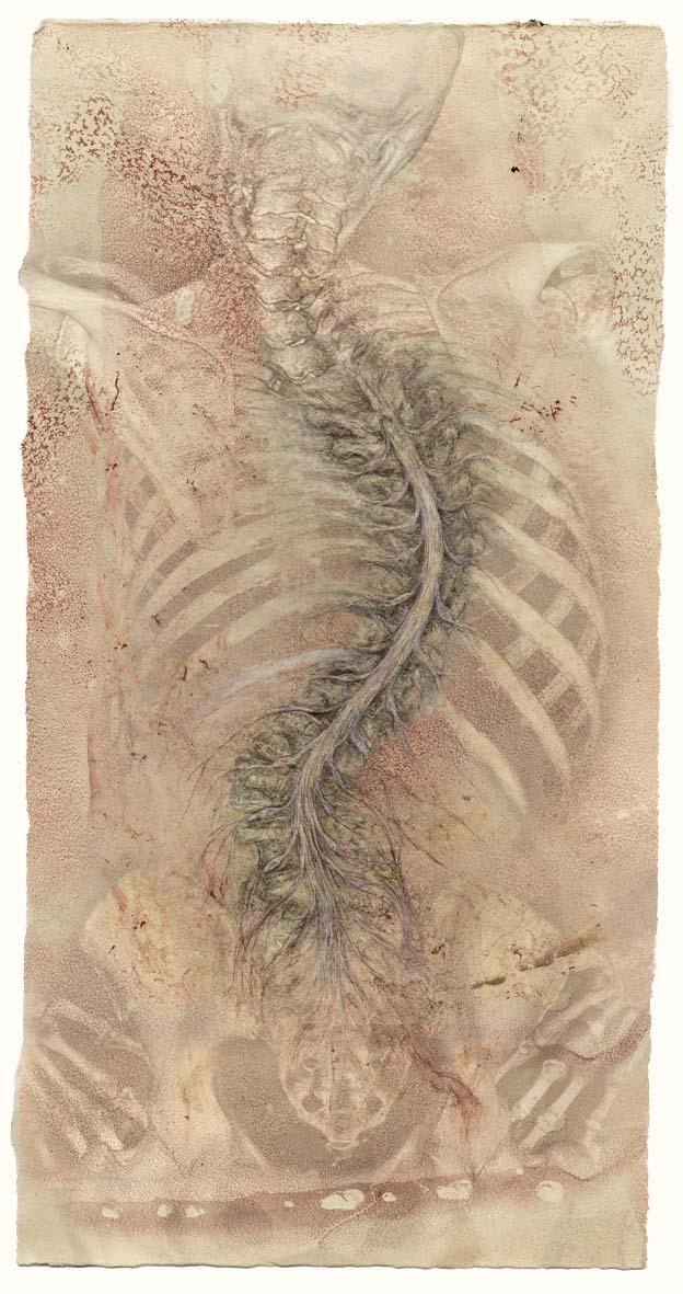 skeleton_scroll+curving_spinal_cord+nerves-72.jpg