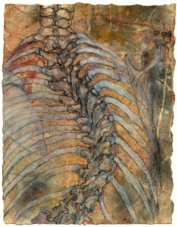 Thoracic spine and ribcage, with scapulae