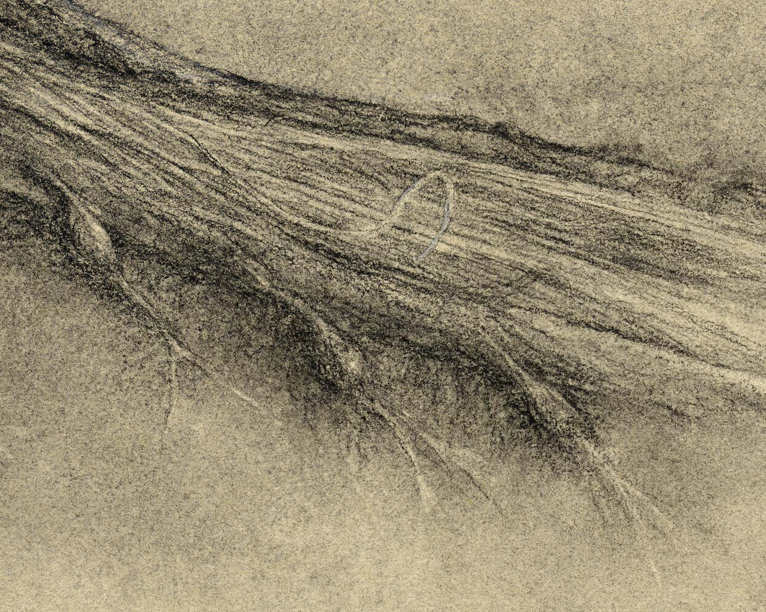Spinal cord (cauda equina) with nerve roots (large detail)