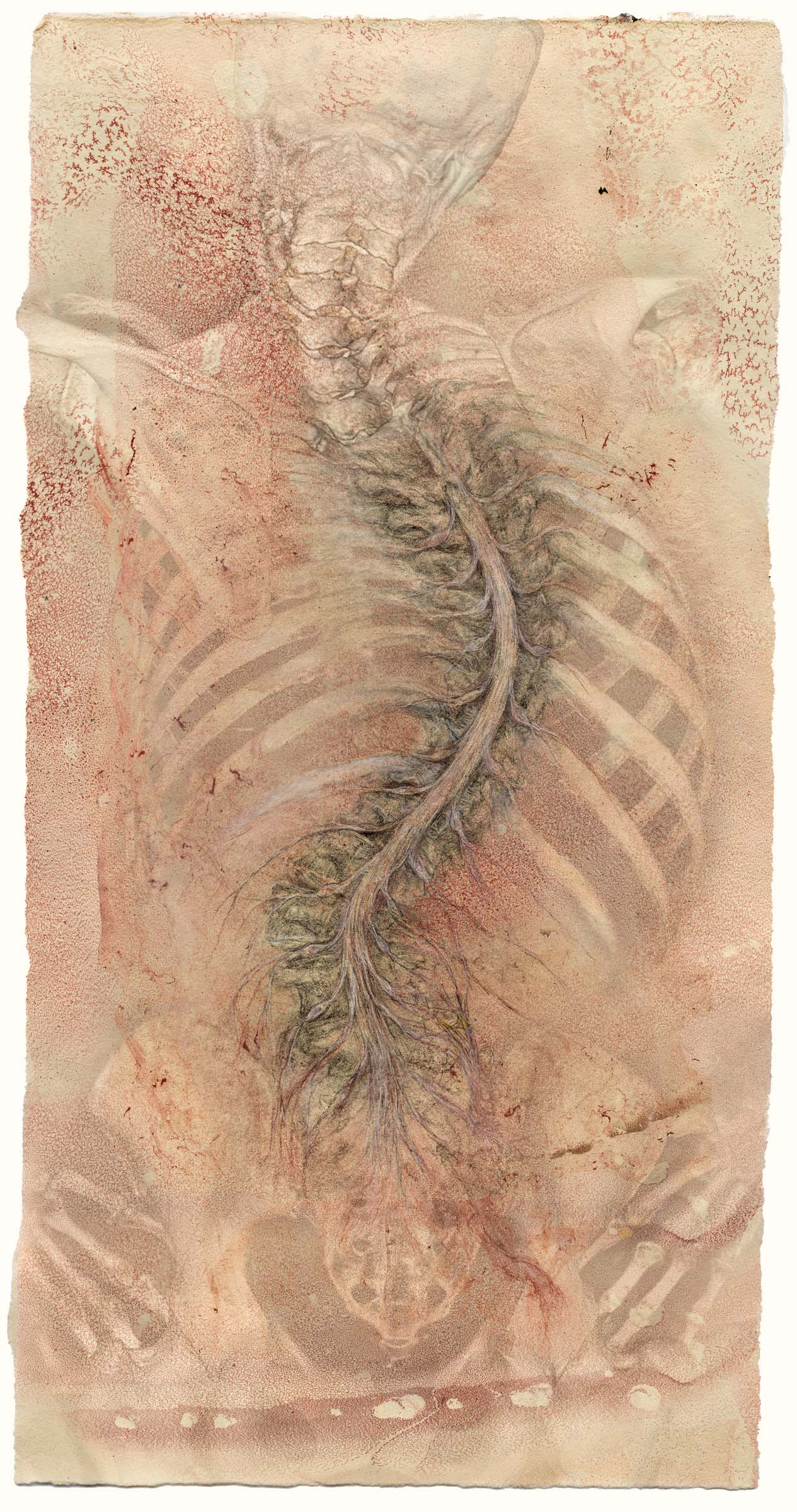 Spinal cord scroll