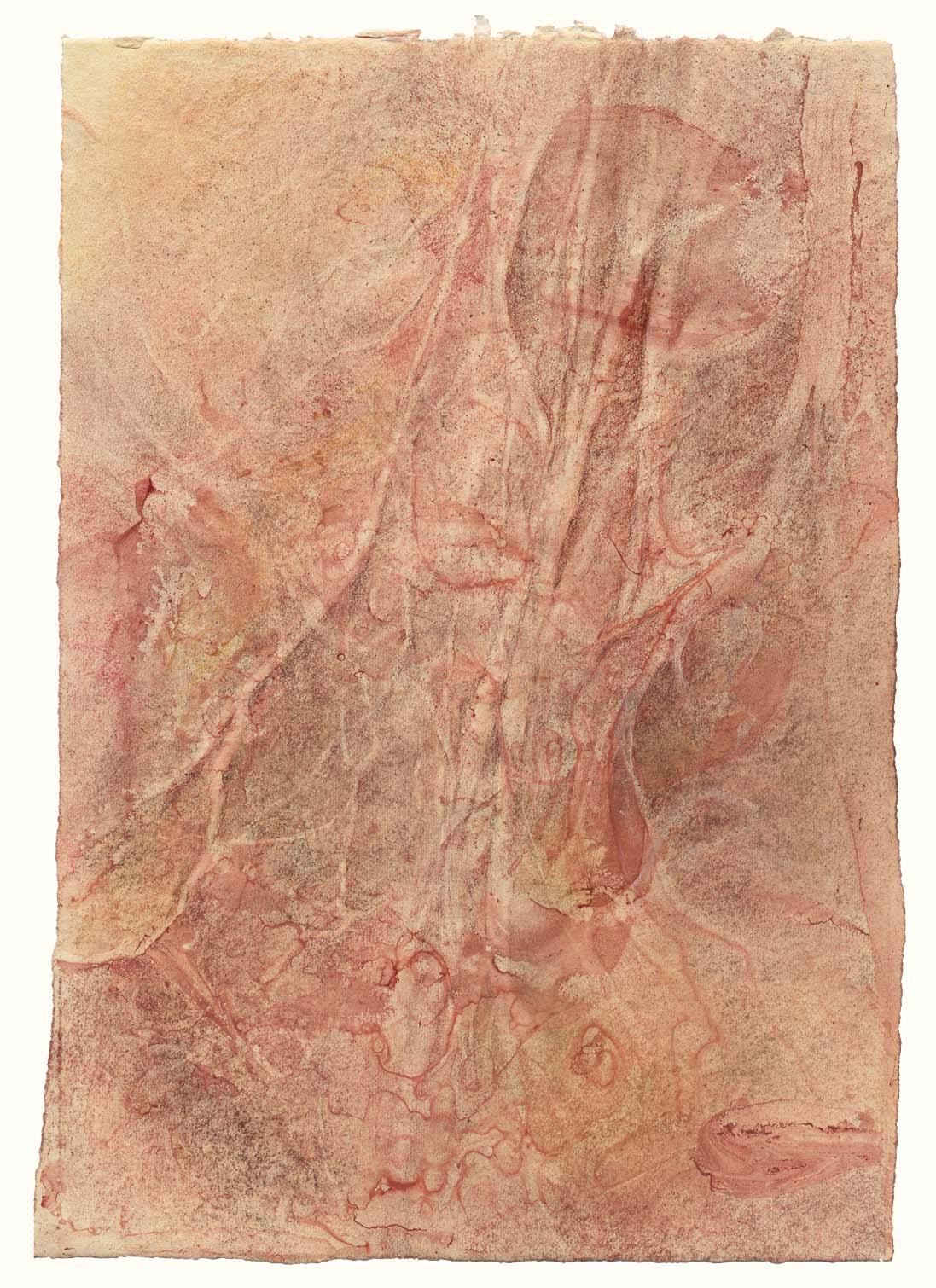 Spinal nerve landscape (#1)