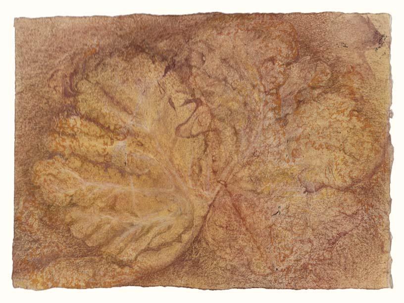 Arbor vitae (cerebellum)