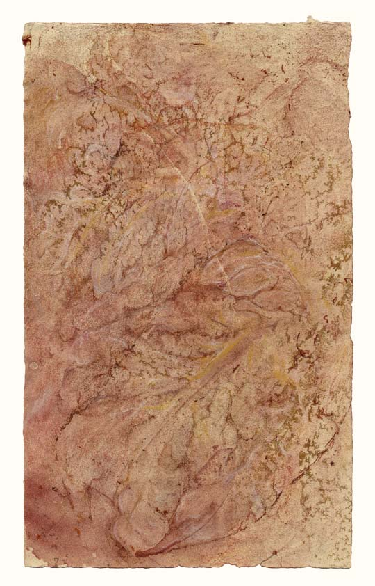 Arbor vitae (mauve crystalline)  $500 (11 x 6.75 in. on 19 x 13 in. sheet)