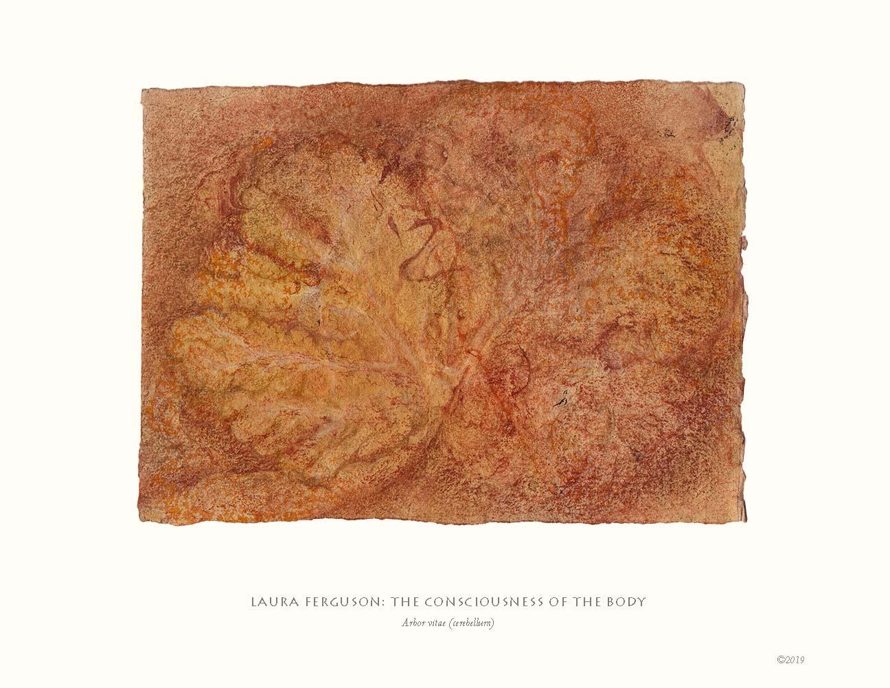 Arbor vitae (cerebellum)  (Consciousness gallery)