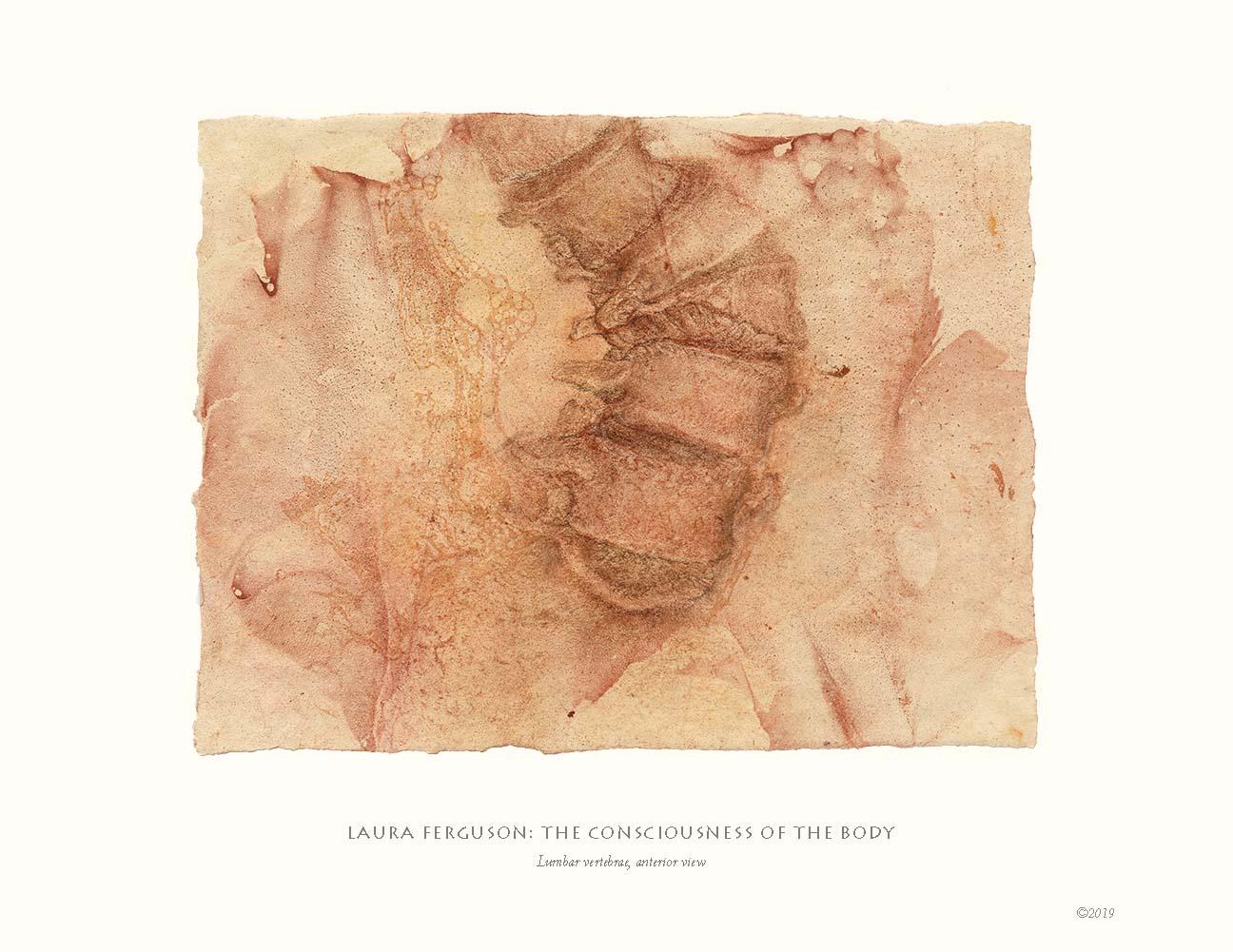 Lumbar vertebrae, anterior view  (Drawing anatomy gallery)