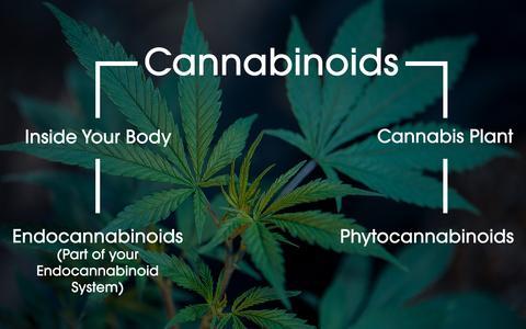 EndocannabinoidsPhytocannabinoids_large.jpg