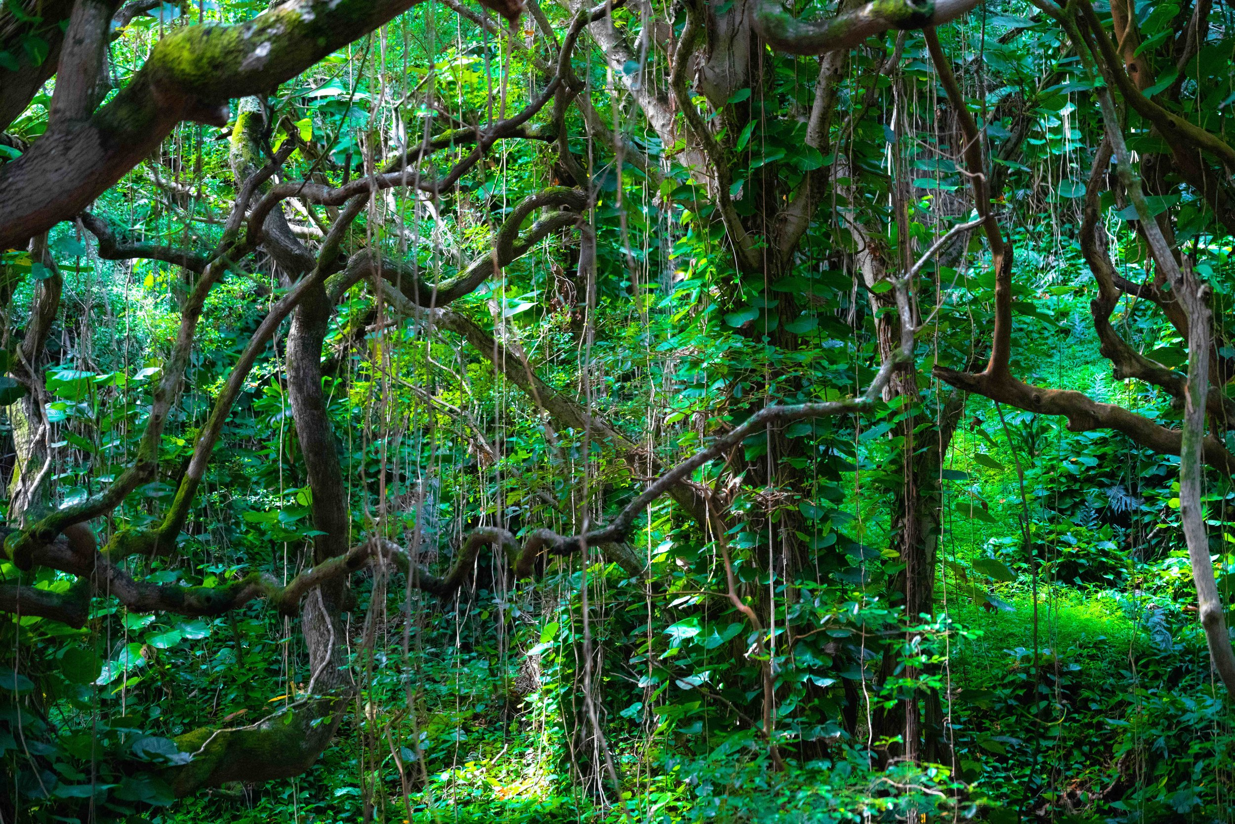 Kauai Hawaii Jungle