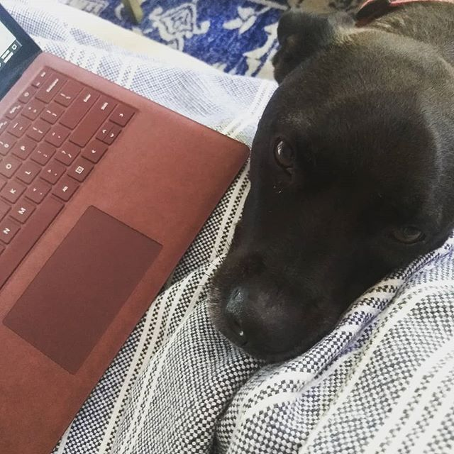 Hello human, I see that you are trying to finish a blog post, I will just put my face right here so you have to give me the pets instead of typing 😇 🐾  #wellwestchester #bloggerlife #dogsofinstagram #beggingdog #rescuedog #tryingtowork #entrepreneurlife #workfromhome #westchesterblogger