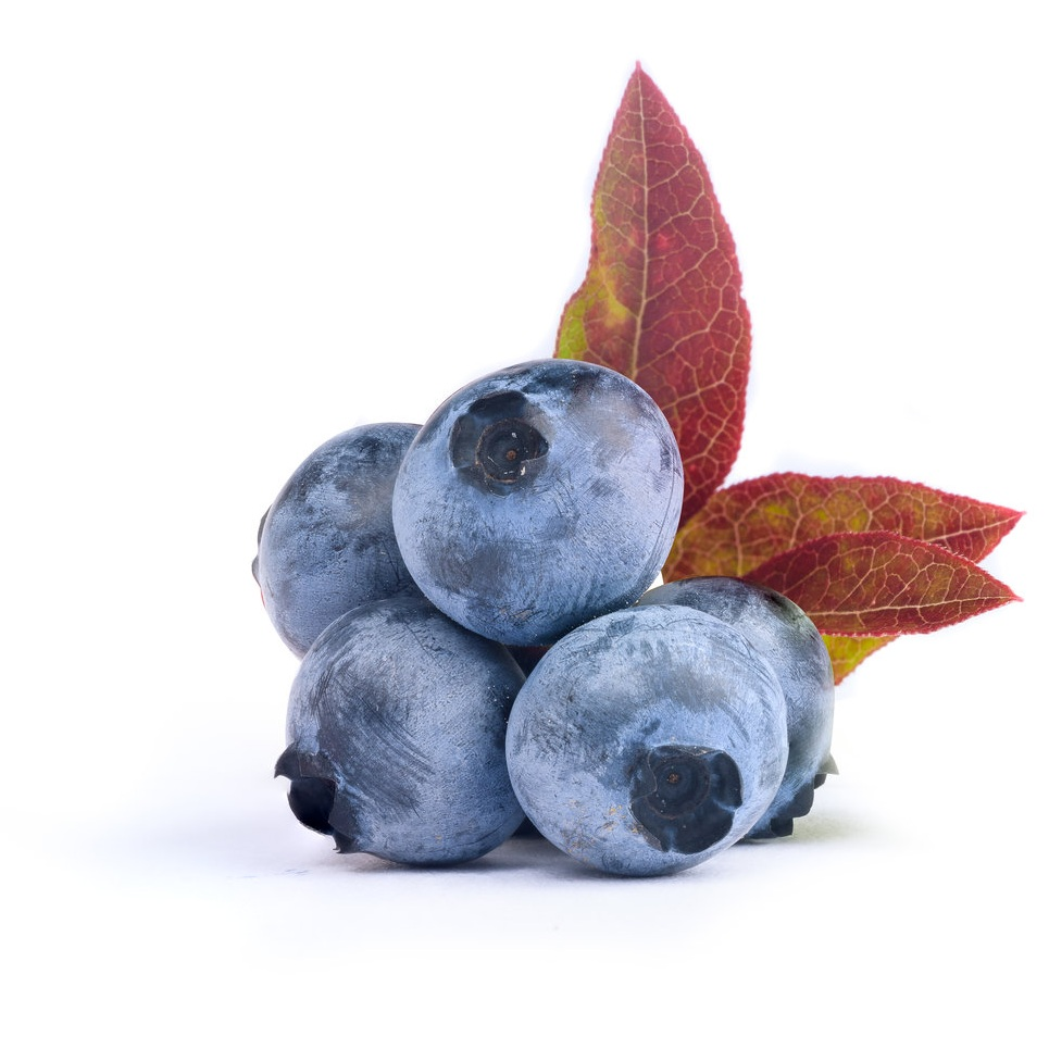 Wild Blueberries.jpg