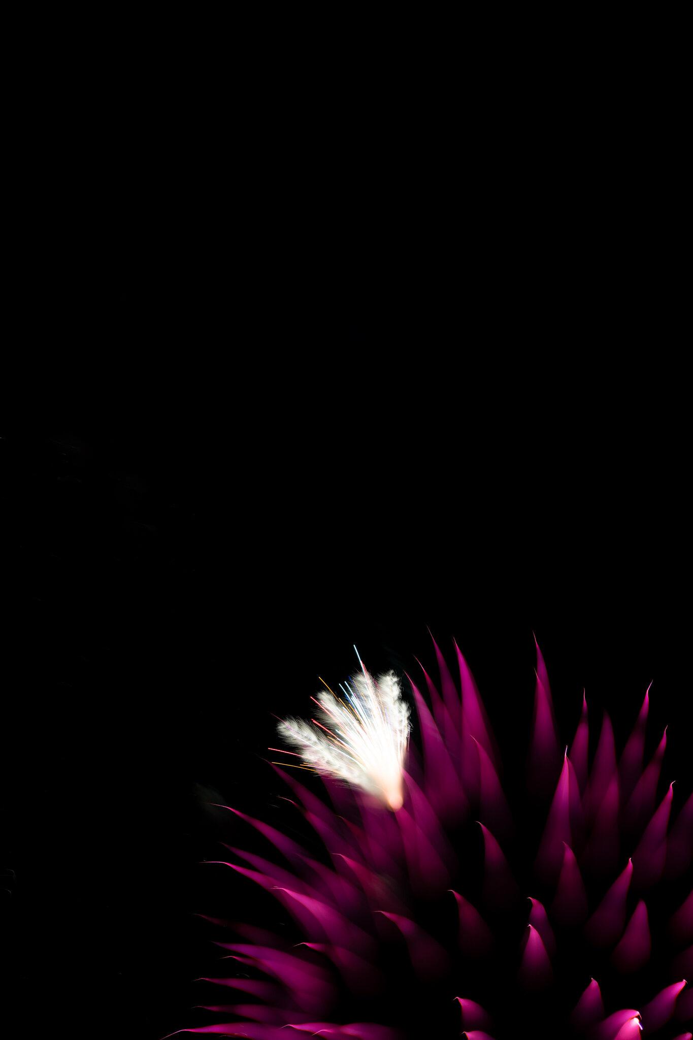 focuspulledfireworks-9.jpg