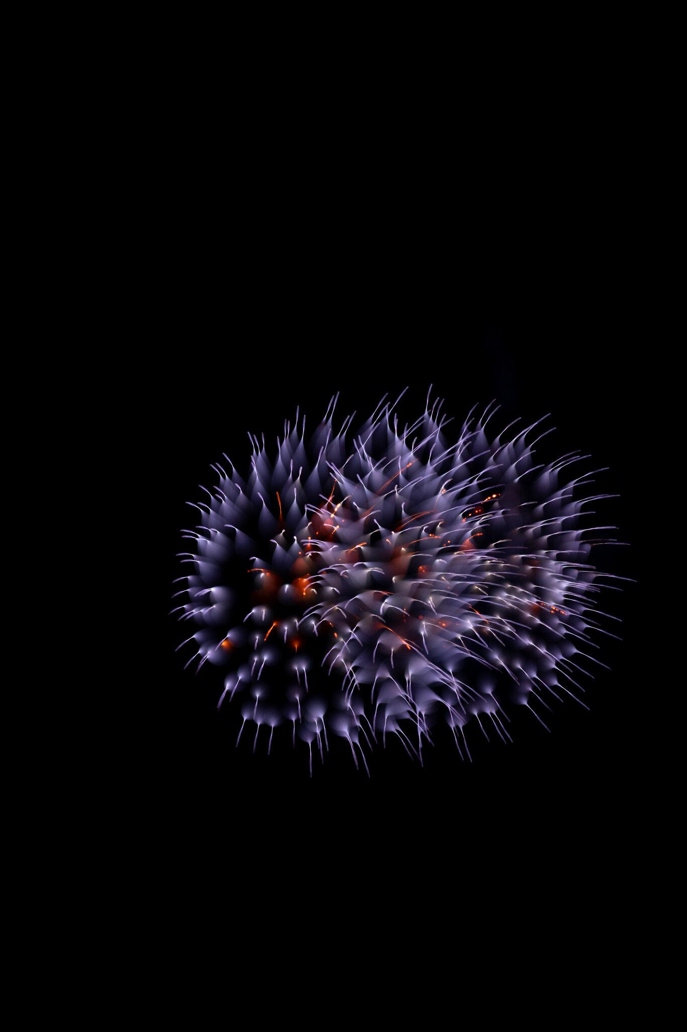 focuspulledfireworks-24.jpg