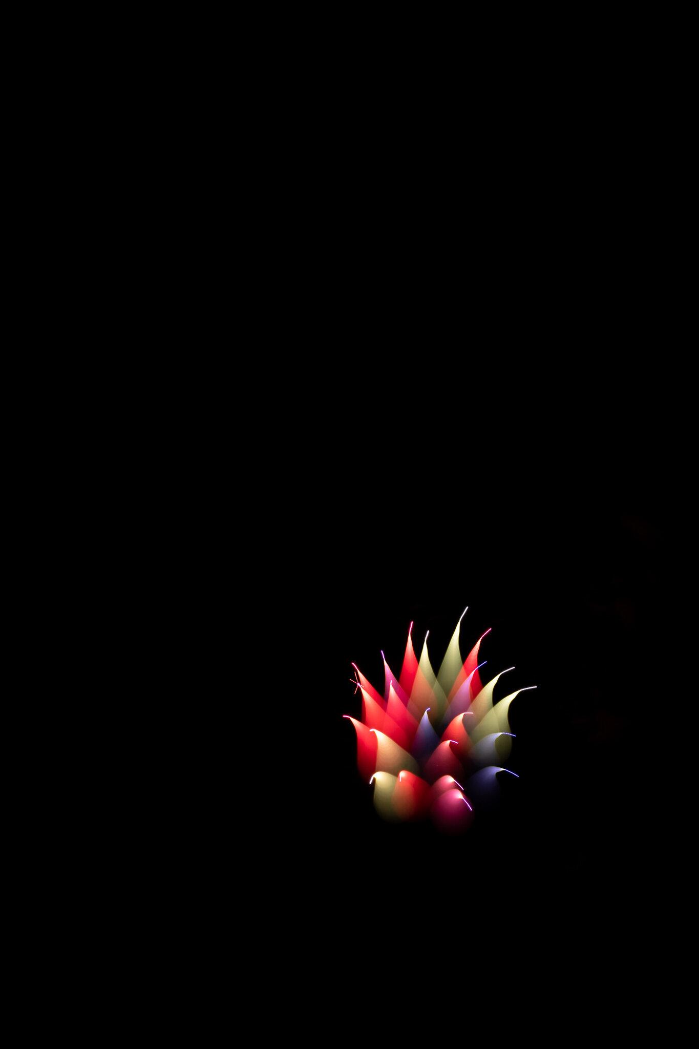 focuspulledfireworks-29.jpg