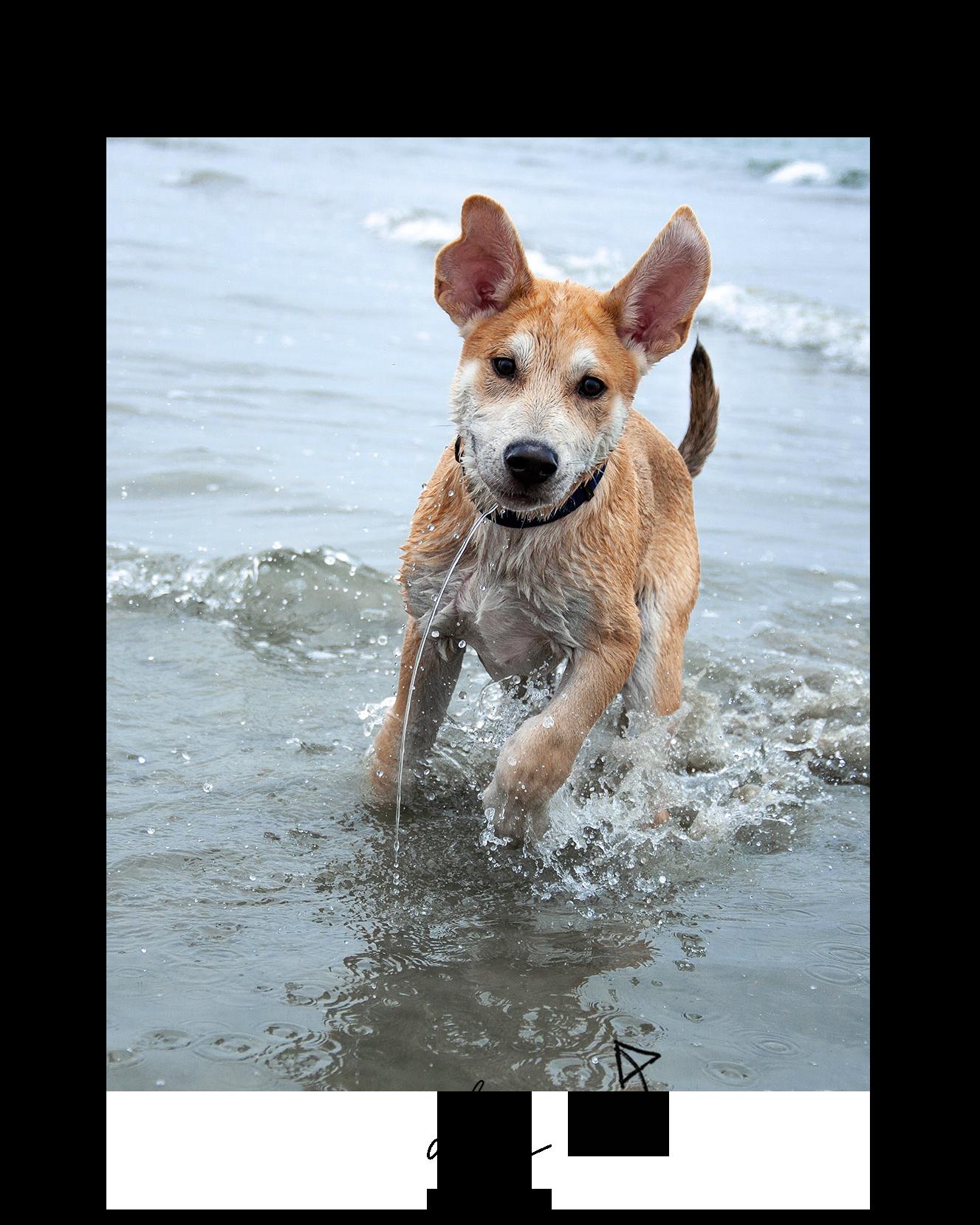 Dog Photo.png