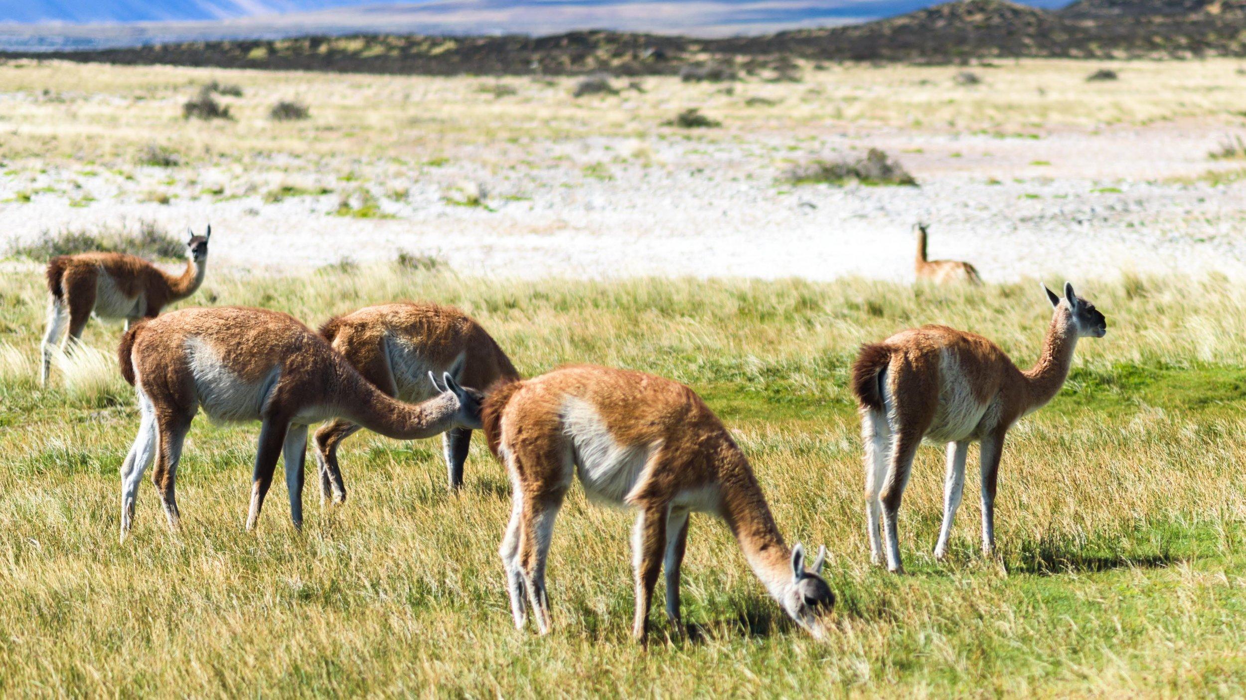 20190118 Torres Del Paine National Park54.jpg