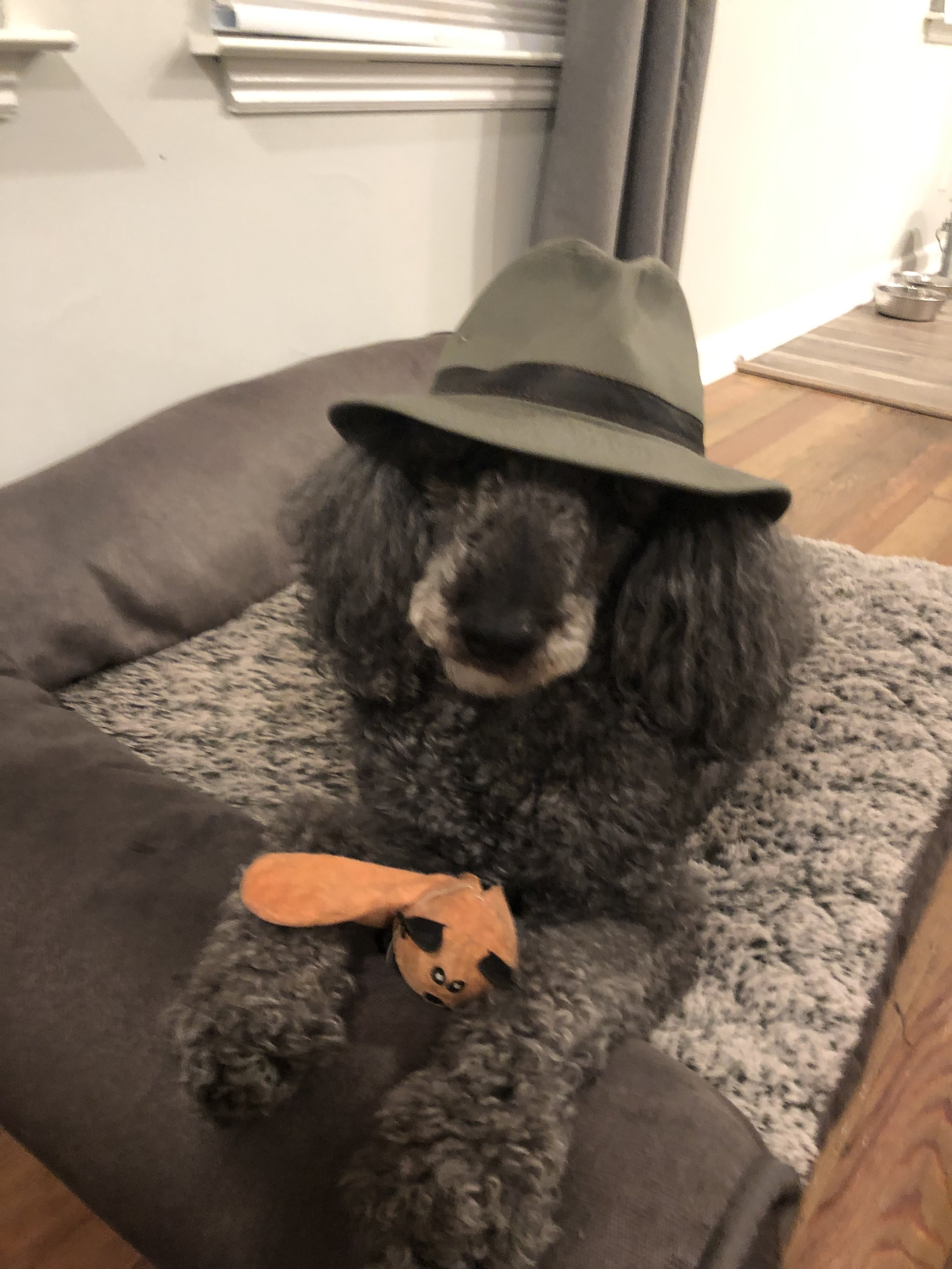 Greyce's favorite hat, favorite toy and favorite bed.