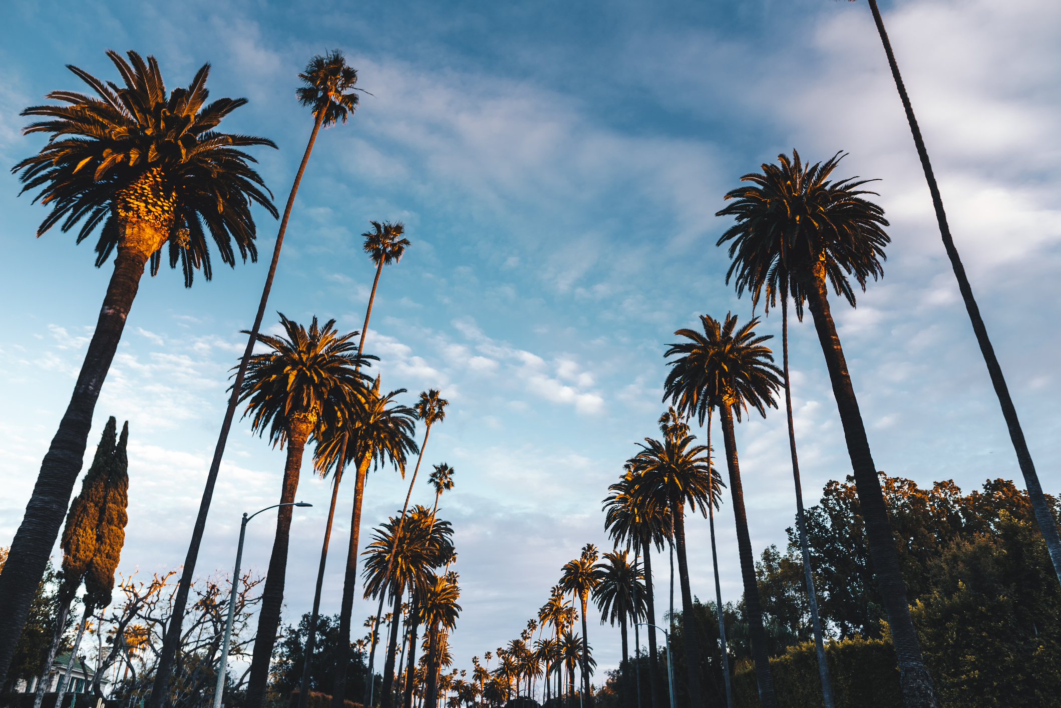 LOS ANGELES GUIDES -