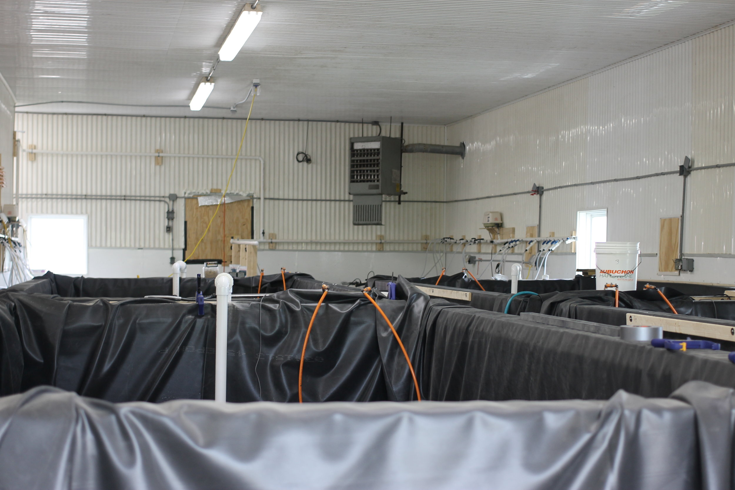 The tanks at Sweet Sound Aquaculture that will be holding fresh shrimp to grow and sell to restaurants and Vermonters.