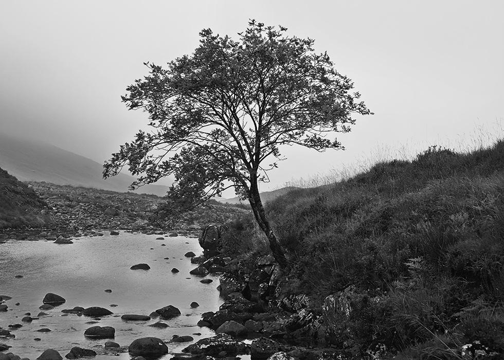 14_10-13_09_Scotland_1799-1_980.jpg