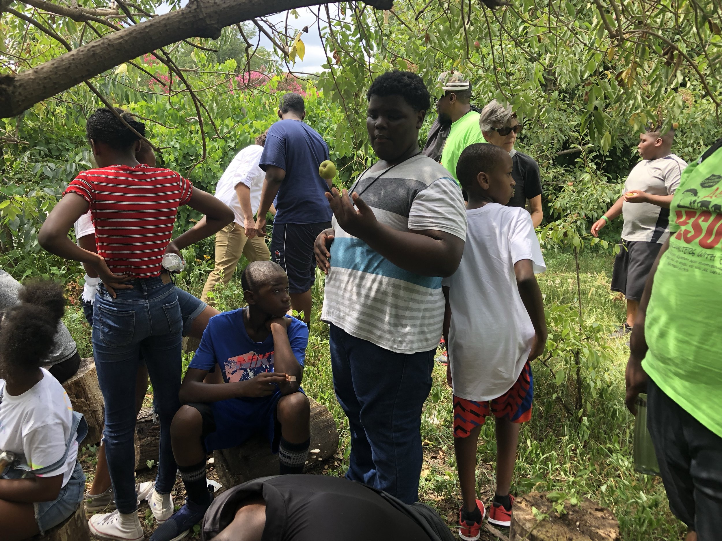 Campers tour the Food Forest at Raleigh City Farm and sample a few pears!