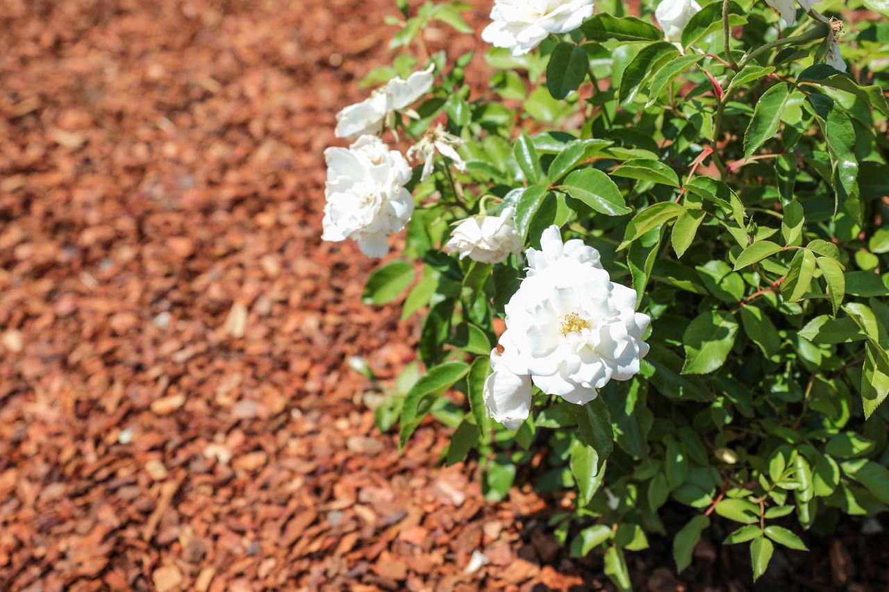 400 La Prenda Los Altos Blu Skye Media-8749-X2.jpg