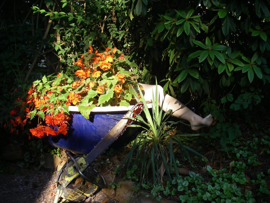 Z Chainsaws and Begonias