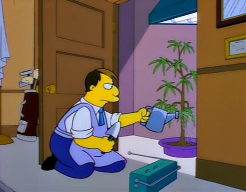 The Mayor Of Springfield grows how own cannabis.