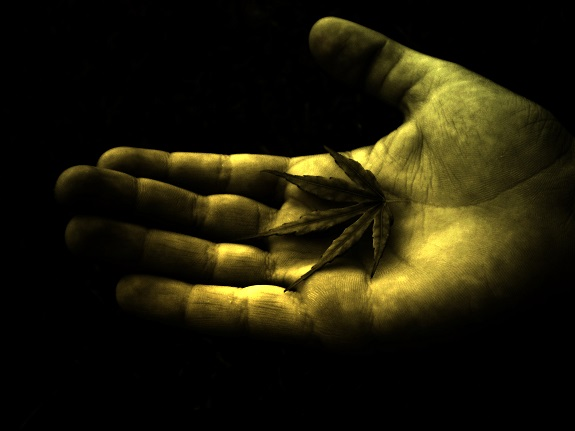 marijuana-leaf-in-hand