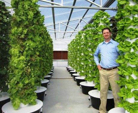 Cannabis vertical farm