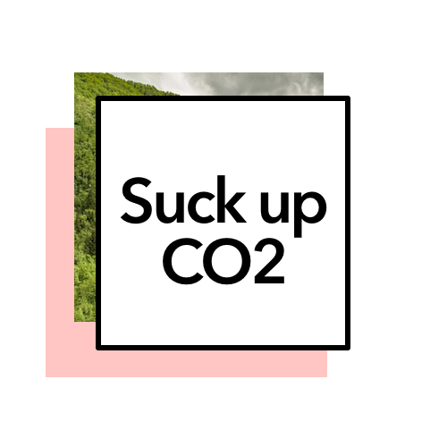 You suck. Yeah, we said it. - Plant 8 trees each mo. and before long you'll sequester 9,600 pounds of CO2 every year.*Translation:* You just kept 5,000 pounds of coal from being burned! Love you 3,000.