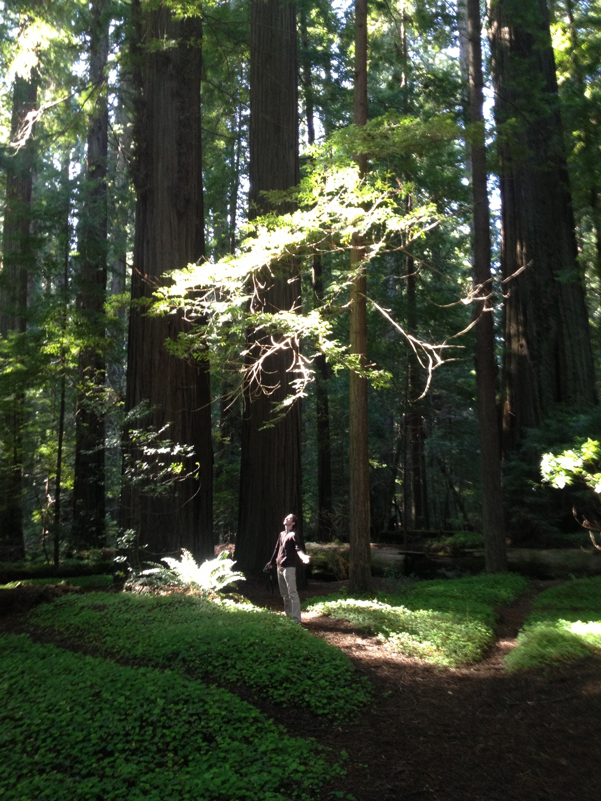 Ian Worrel among the trees. This spot was heavily used as reference for the forests of gravity falls.